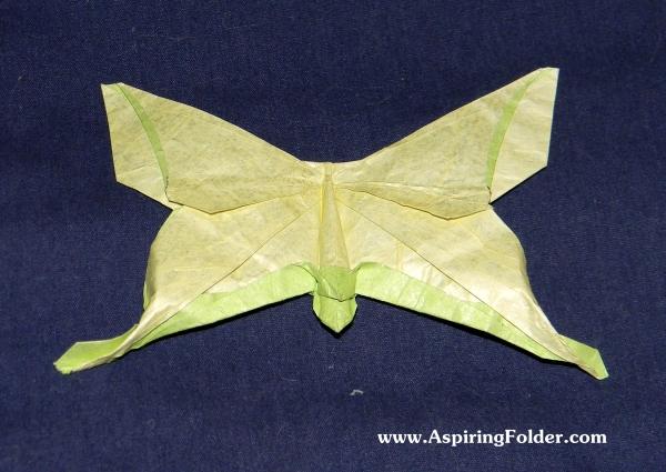 origami mudarri luna moth aspiring folder